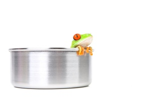 frog in a cooking pot closeup isolated on white - red-eyed tree frog (Agalychnis callidryas)