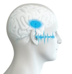 Menschliches Ohr eines Manns mit Schallwellen und Gehirn mit markiertem Hörzentrum, Auditiver Cortex,